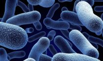 Refrigerated vs. Non Refrigerated Probiotics
