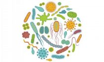 How to Choose the Best Probiotics for You