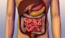 10 Strange Facts About The Gut