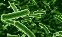 How Do Probiotics Work?
