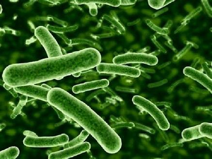 How Do Probiotics Work?
