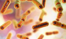 New Studies Show that Probiotics Can Help Your Liver Recover